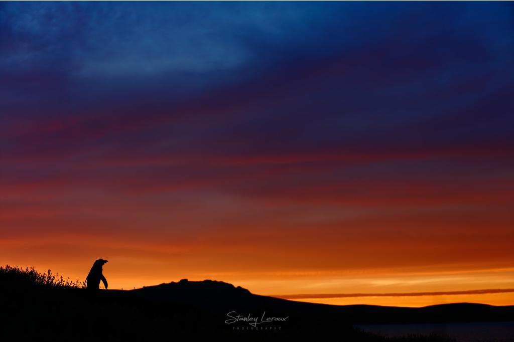 Crépuscule Subantartique - série Cinquantièmes Hurlants © Stanley Leroux