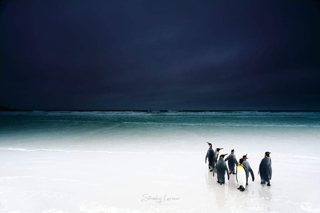 Rois des Ténèbres - série Cinquantièmes Hurlants © Stanley Leroux